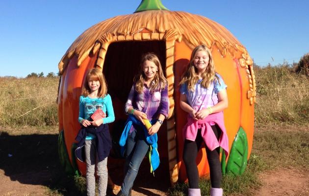 Pumpkin Patch at the Summer's farm
