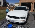 Forår – Mustangen er tilbage.